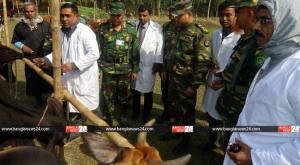 cowbg_banglanews24_910882054